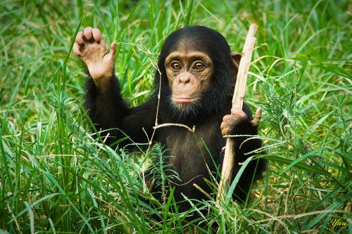 搜罗一堆爆笑可爱的动物-搞笑图片