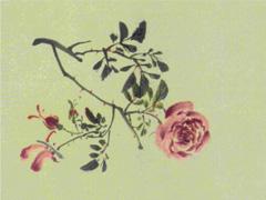 花果图卷之月季花