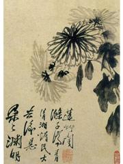 花卉图册之画菊花(八
