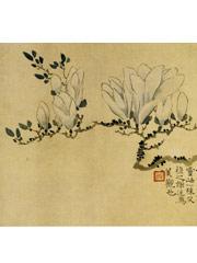 花卉图册之玉兰花
