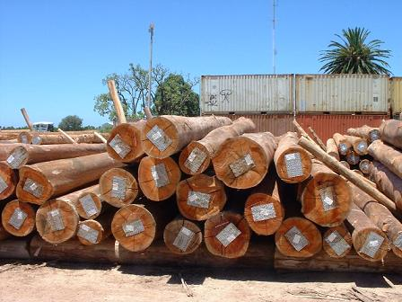 2013木材市场年终盘点:南美原木市场冰火两重天